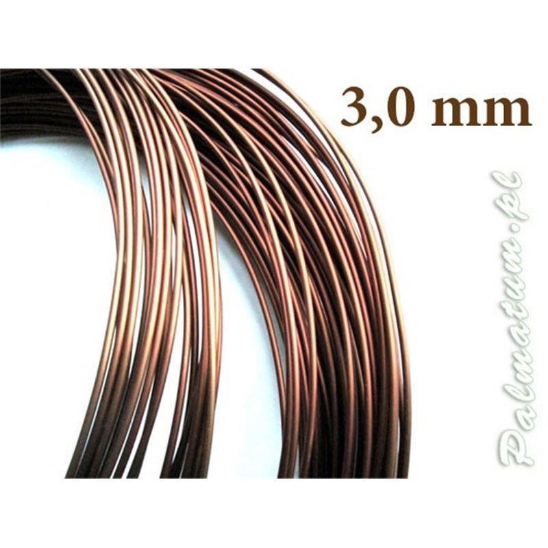 Japanese maple prebonsai - October 2019