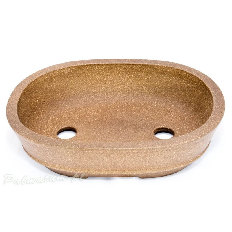 european white elm leaves