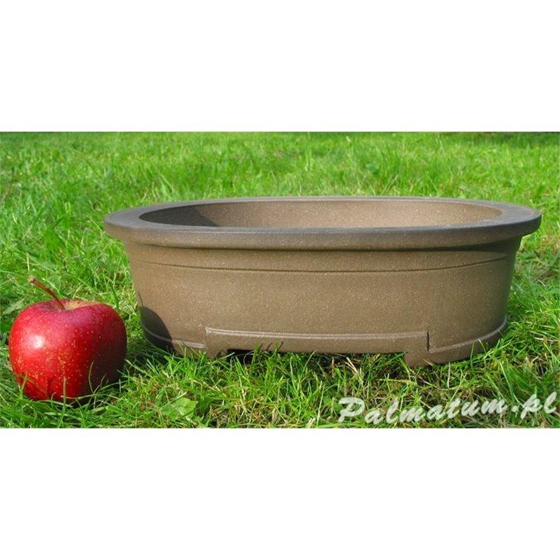 black mulberry fruit