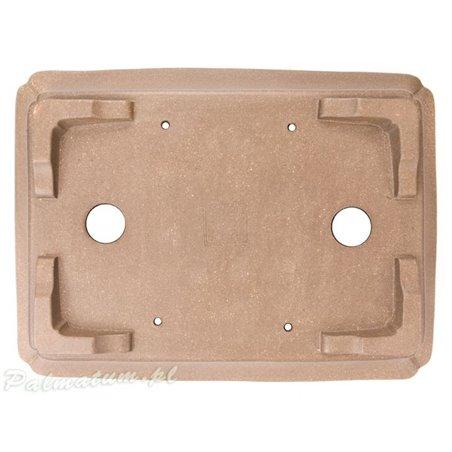 Ginkgo biloba seedlings
