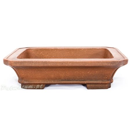 European white elm prebonsai