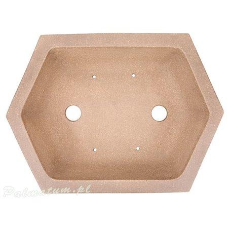Pinus mugo prebonsai