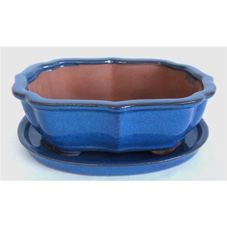 Japanese maple prebonsai - October 2020