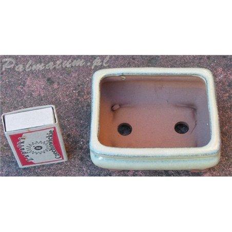 Sosna thunberga (nasiona)