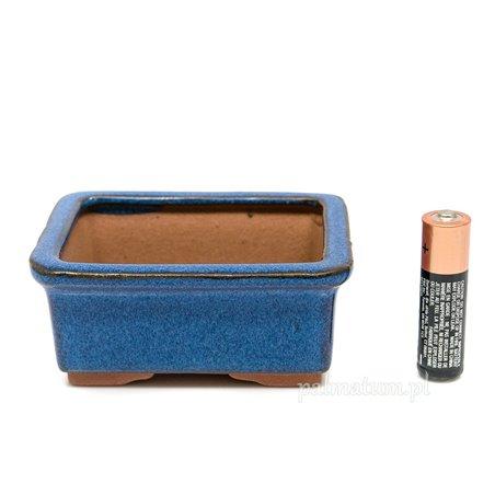Ambrowiec chiński (nasiona)