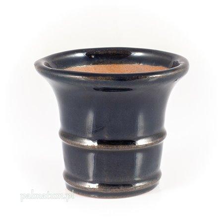 Juniperus chinensis Shimpaku