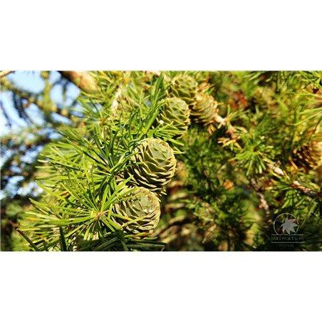 Fisherman mudman, chinese figurine 5.5cm