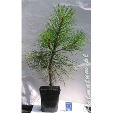 Fisherman mudman, chinese figurine 7cm