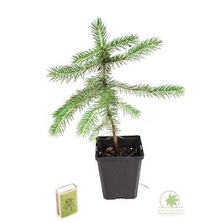 Wise man mudman, chinese figurine