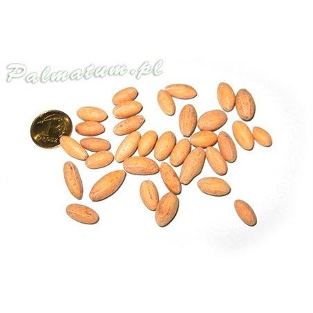 wise man mudman, chinese figurine 8cm