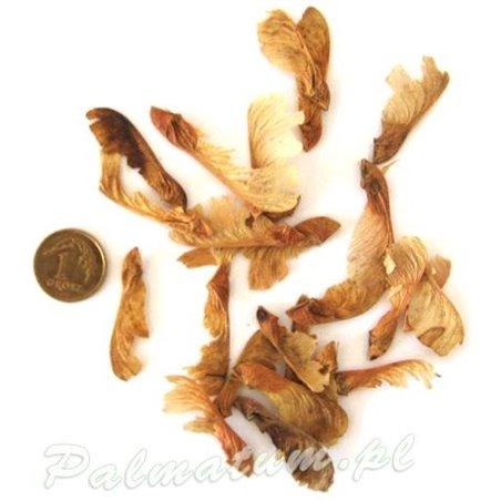 figurka bonsai, chińska pagoda 6.5 cm